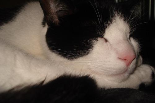 manny-sleeping.jpg